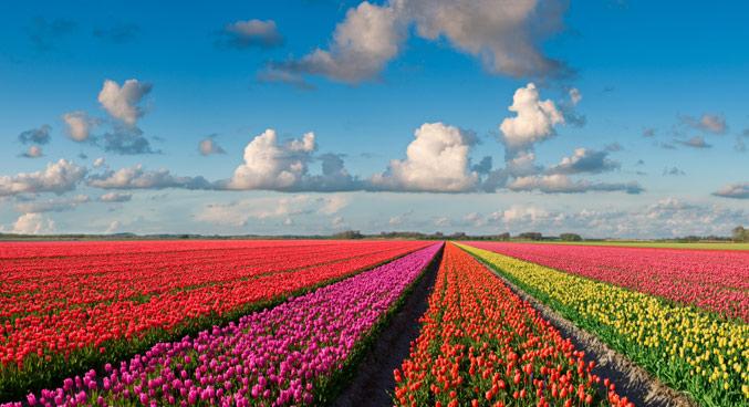 tuliptime_netherlands