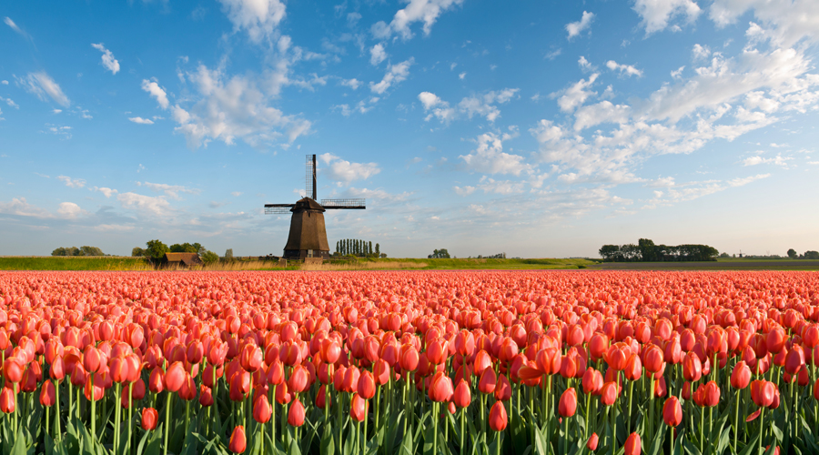 Tulips of Northern Holland With Avalon Waterways