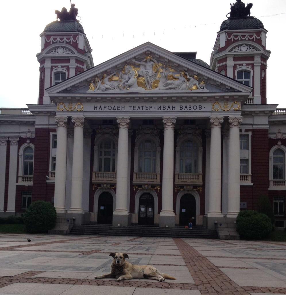 Columns&Dog