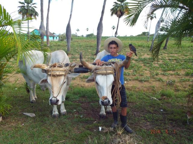 Tauck Cuba- Locals on the Farm with Animals