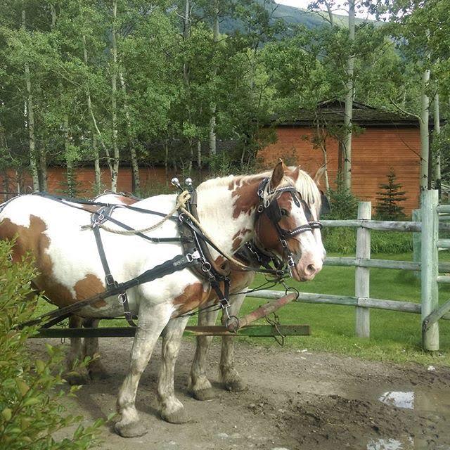 Horse - Trafalgar Canada