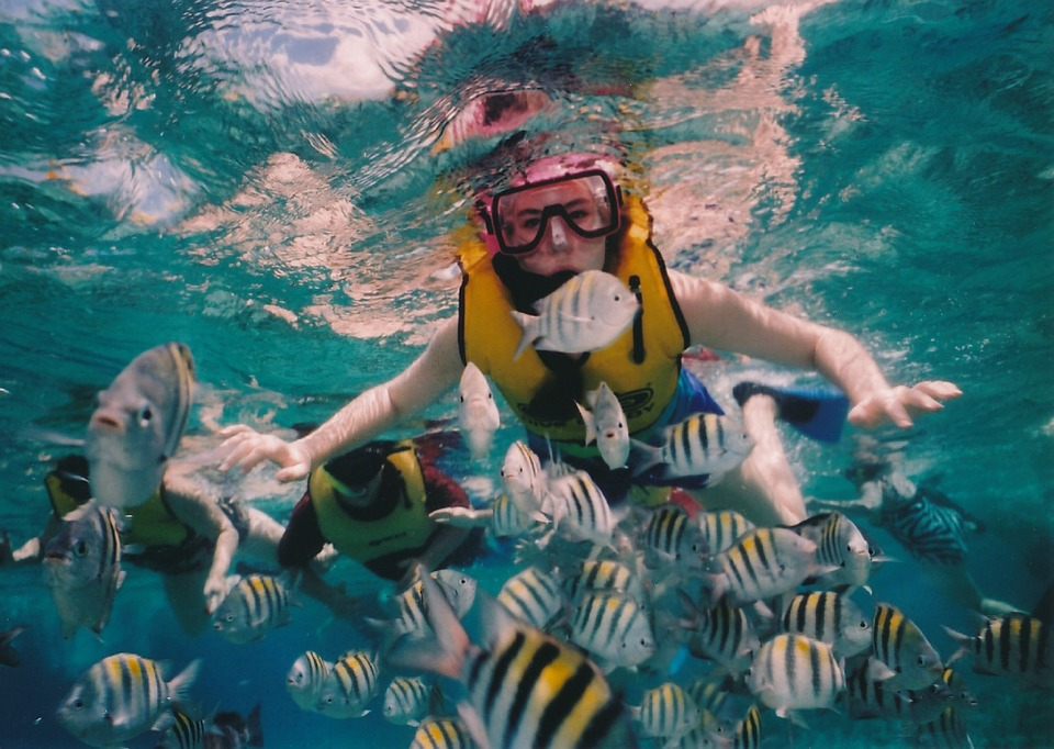 Snorkeling - National Plan Cruise Month