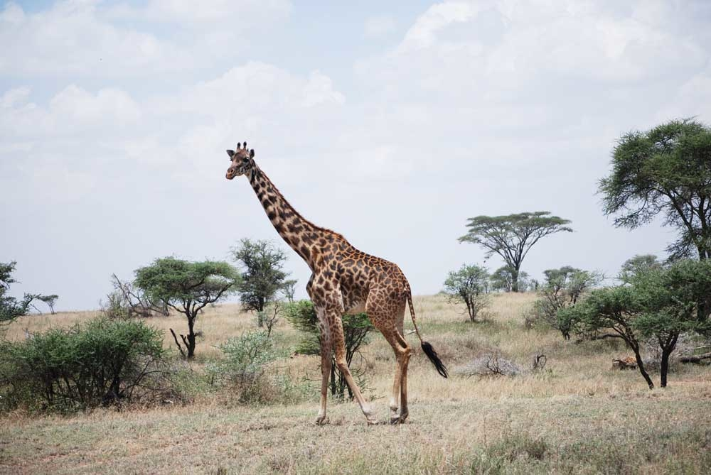 Mt. Kilimanjaro And African Safari With G Adventures