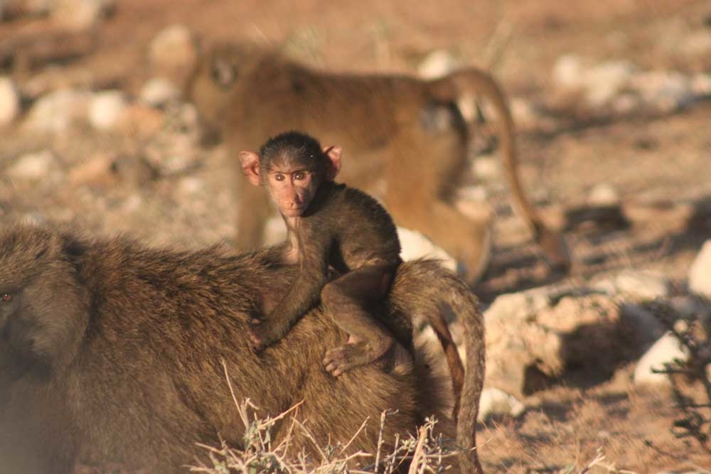 Safari With Nairobi With Globus
