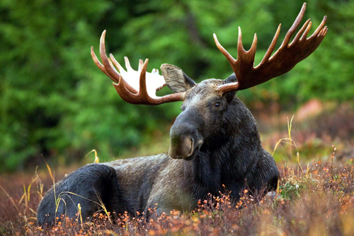 Big 5 Animals In Alaska