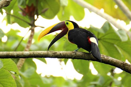 Costa Rica- Pura Vida With Tauck